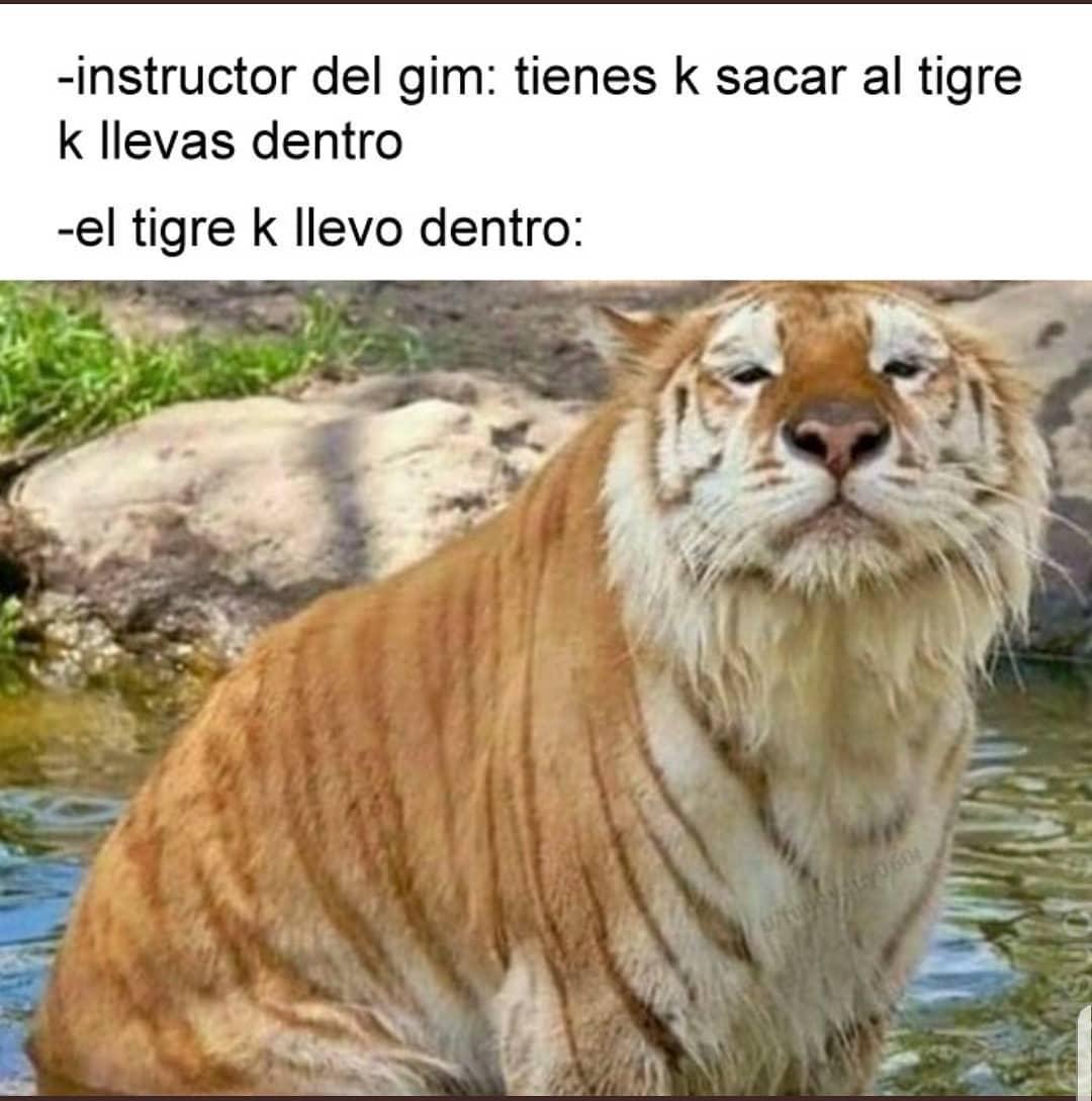 Instructor del gim: Tienes k sacar al tigre k llevas dentro.  El tigre k llevo dentro: