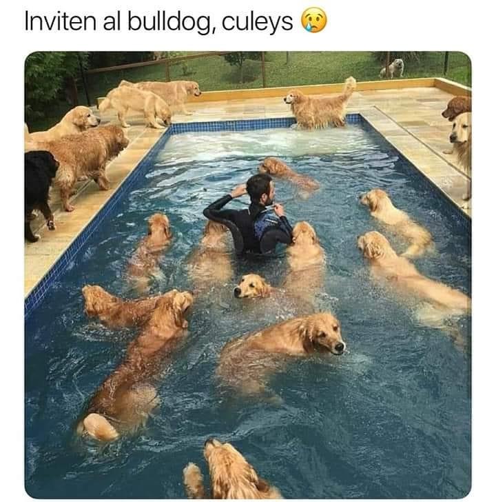 Inviten al bulldog, culeys.