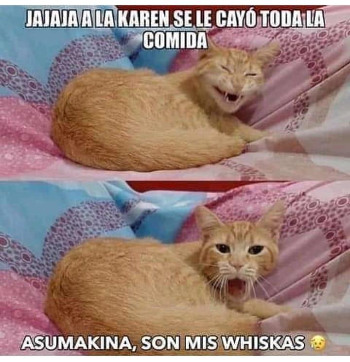 Jajaja a la Karen se le cayó toda la comida. Asumakina, son mis whiskas.