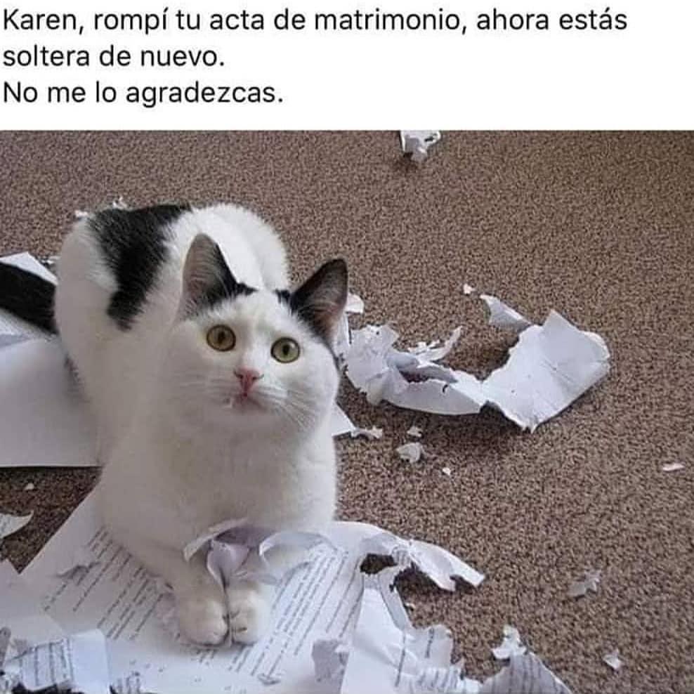 Karen, rompí tu acta de matrimonio, ahora estás soltera de nuevo.  No me lo agradezcas.