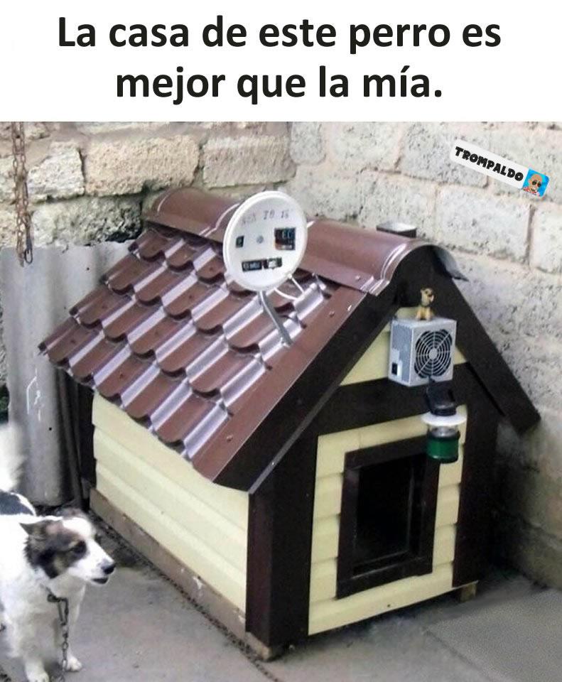 La casa de este perro es mejor que la mía.