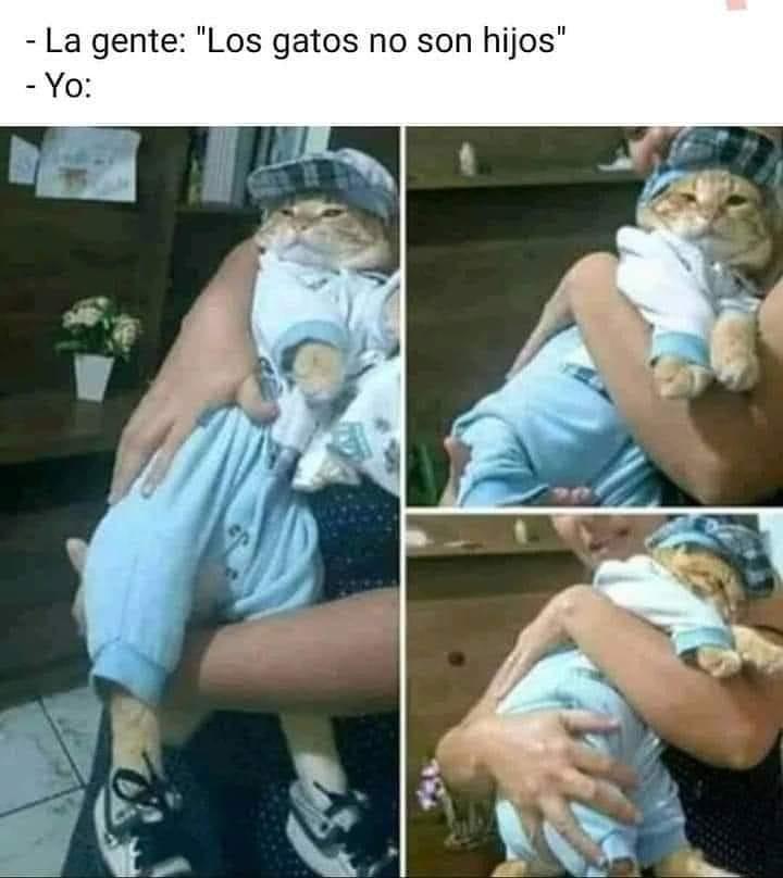 """La gente: """"Los gatos no son hijos"""".  Yo:"""