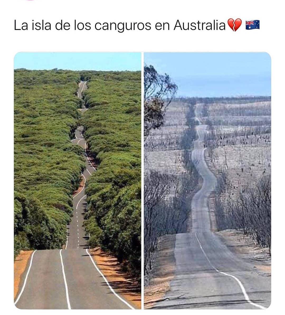 La isla de los canguros en Australia.