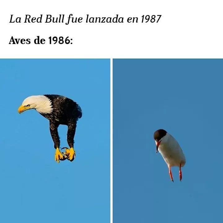 La Red Bull fue lanzada en 1987.  Aves de 1986:
