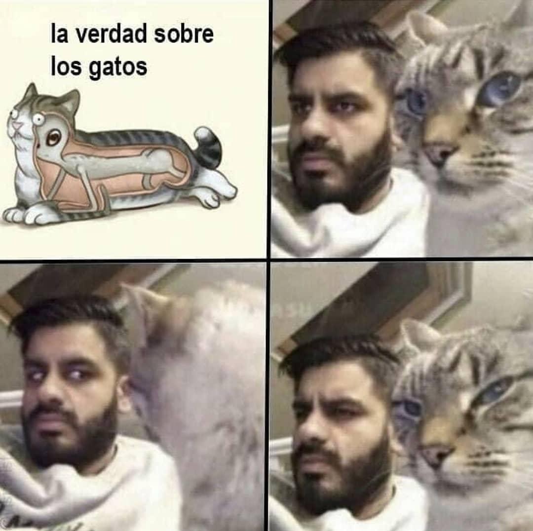 La verdad sobre los gatos.