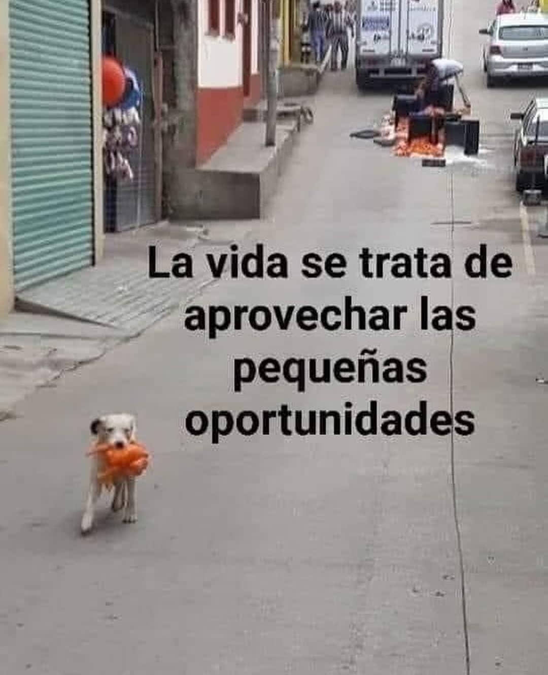 La vida se trata de aprovechar las pequeñas oportunidades.