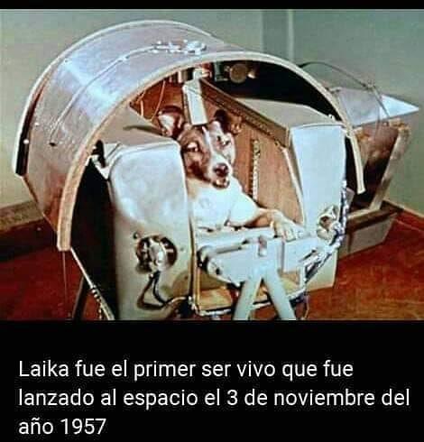 Laika fue el primer ser vivo que fue lanzado al espacio el 3 de noviembre del año 1957.