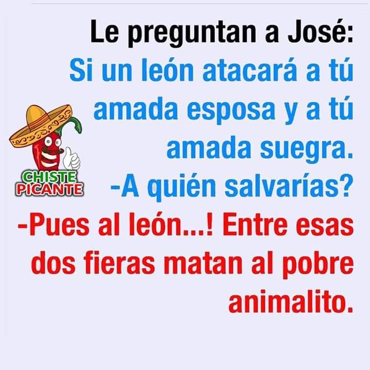 Le preguntan a José:  Si un león atacará a tú amada esposa y a tú amada suegra.  - A quién salvarías?  - Pues al león...! Entre esas dos fieras matan al pobre animalito.