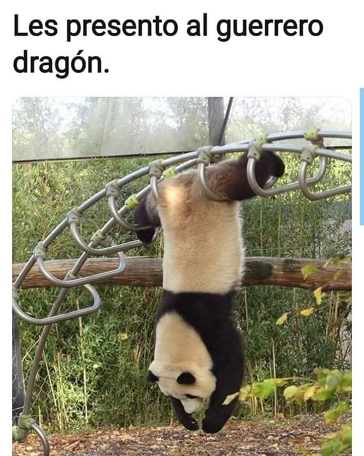Les presento al guerrero dragón.