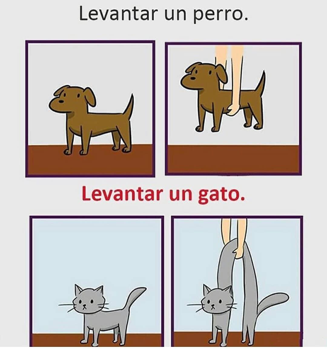Levantar un perro. / Levantar un gato.