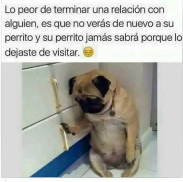 Lo peor de terminar una relación con alguien, es que no verás de nuevo a su perrito y su perrito jamás sabrá porque lo dejaste de visitar.