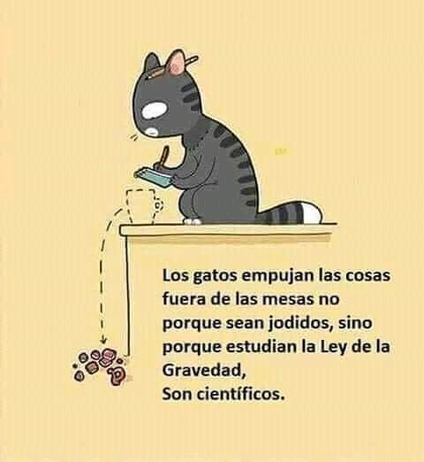 Los gatos empujan las cosas fuera de las mesas no porque sean jodidos, sino porque estudian la Ley de la Gravedad, son científicos.