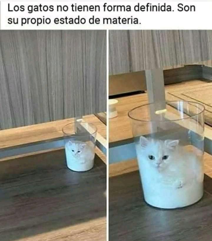 Los gatos no tienen forma definida. Son su propio estado de materia.