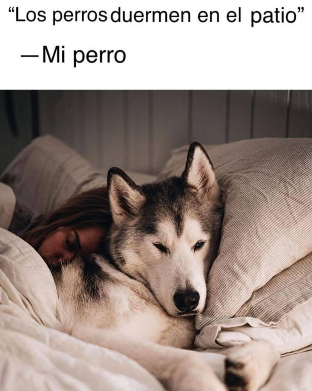 """""""Los perros duermen en el patio"""".  Mi perro."""