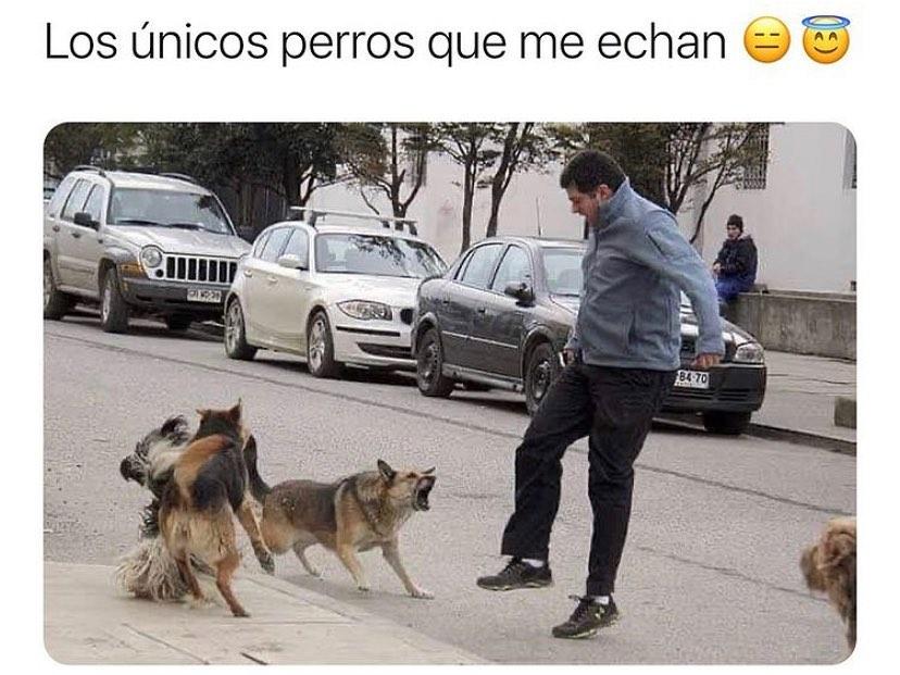 Los únicos perros que me echan.
