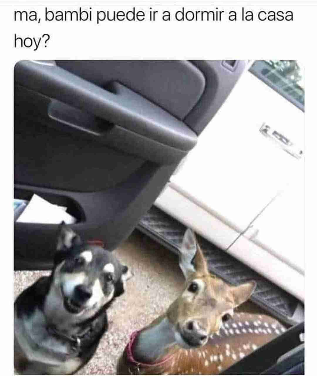 Ma, bambi puede ir a dormir a la casa hoy?