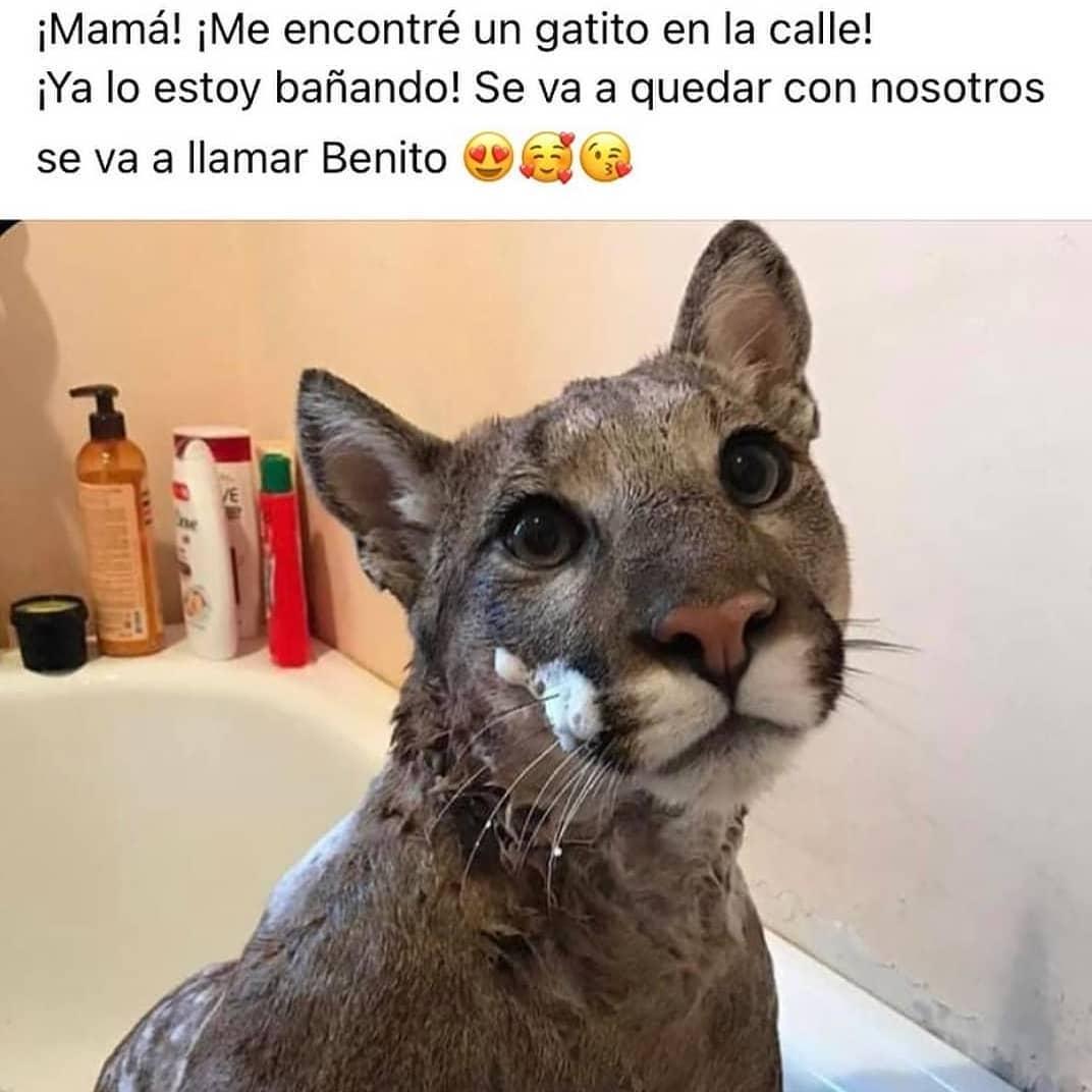 ¡Mamá! ¡Me encontré un gatito en la calle! ¡Ya lo estoy bañando! Se va a quedar con nosotros. Se va a llamar Benito.