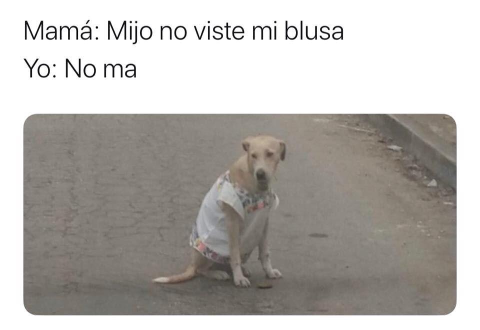 Mamá: Mijo no viste mi blusa.  Yo: No ma.