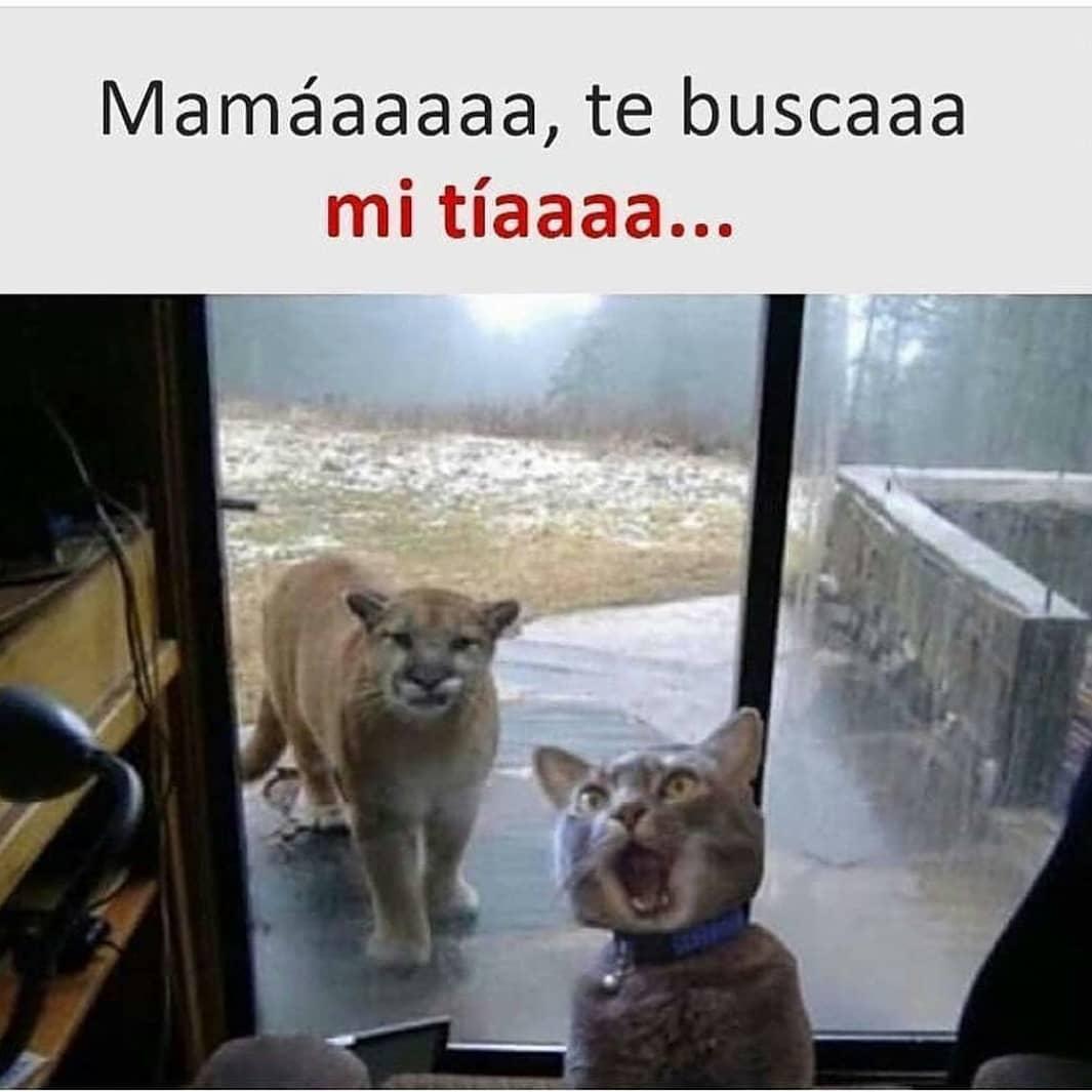 Mamáaaaaa, te buscaaa mi tíaaaa...
