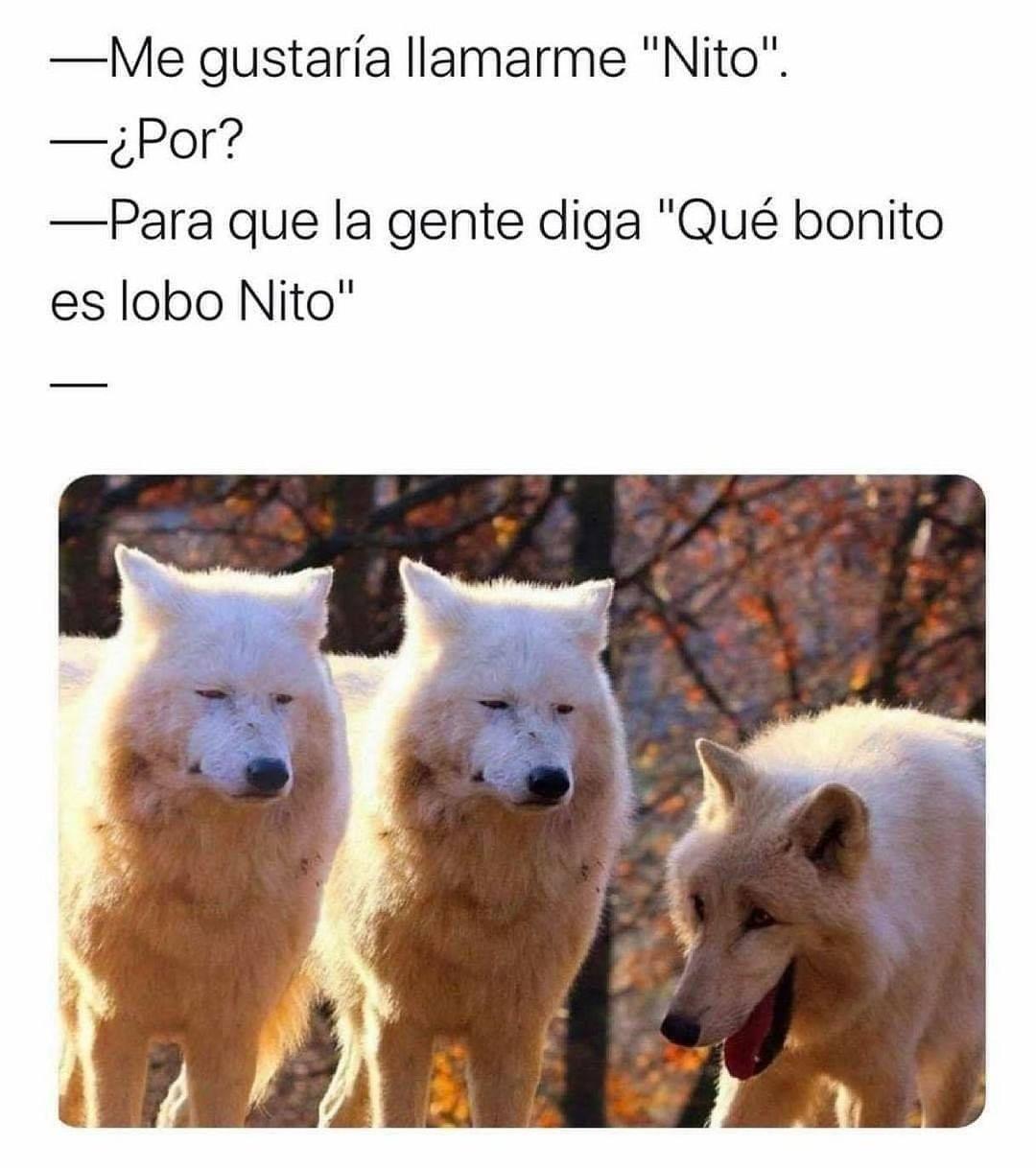 """Me gustaría llamarme """"Nito"""".  ¿Por?  Para que la gente diga """"Qué bonito es lobo Nito""""."""