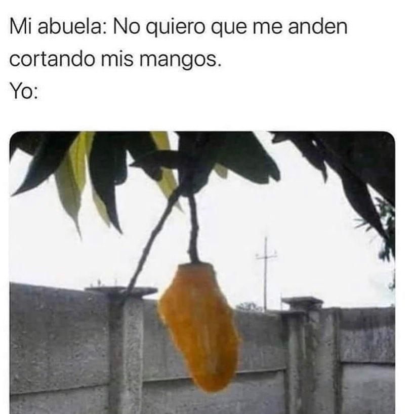 Mi abuela: No quiero que me anden cortando mis mangos.  Yo:
