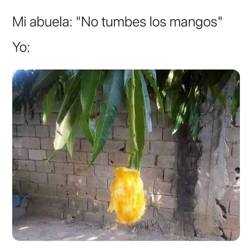 Mi abuela: No tumbes los mangos.  Yo:
