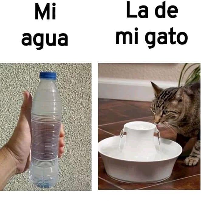 Mi agua. / La de mi gato.