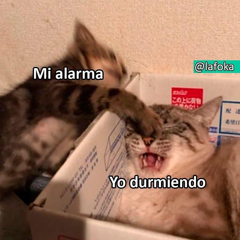Mi alarma. / Yo durmiendo.