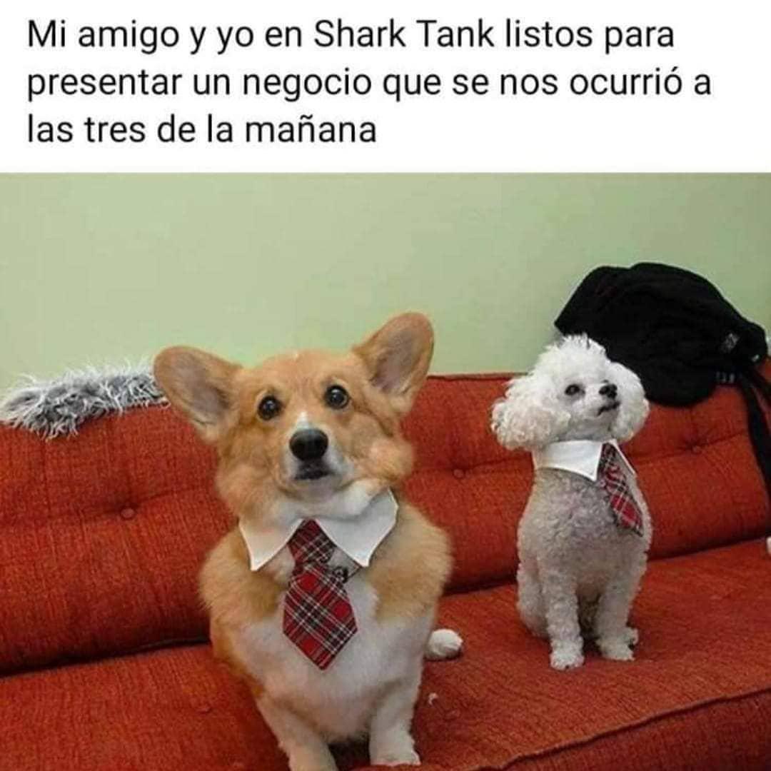 Mi amigo y yo en Shark Tank listos para presentar un negocio que se nos ocurrió a las tres de la mañana.