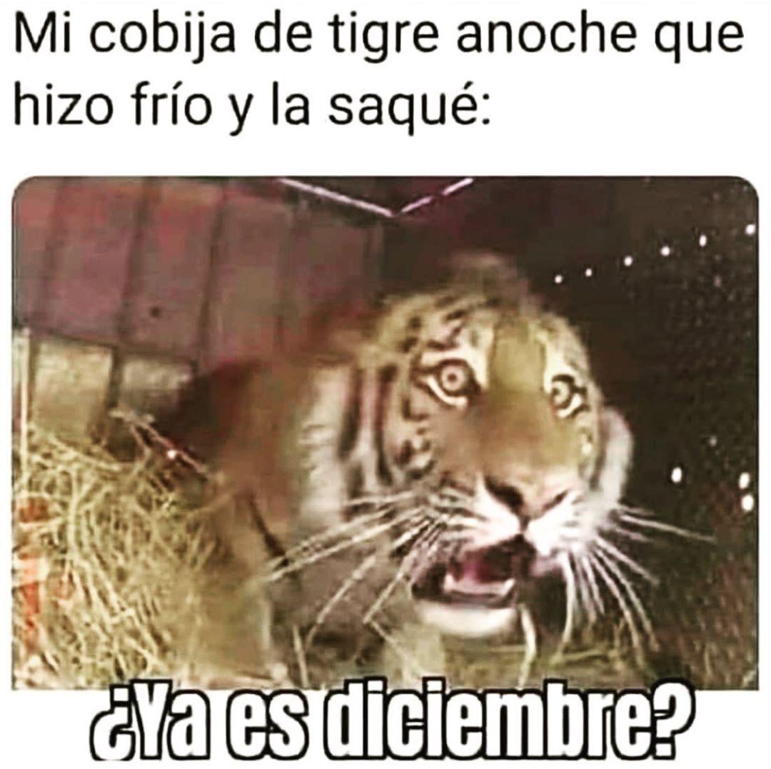 Mi cobija de tigre anoche que hizo frío y la saqué:  ¿Ya es diciembre?