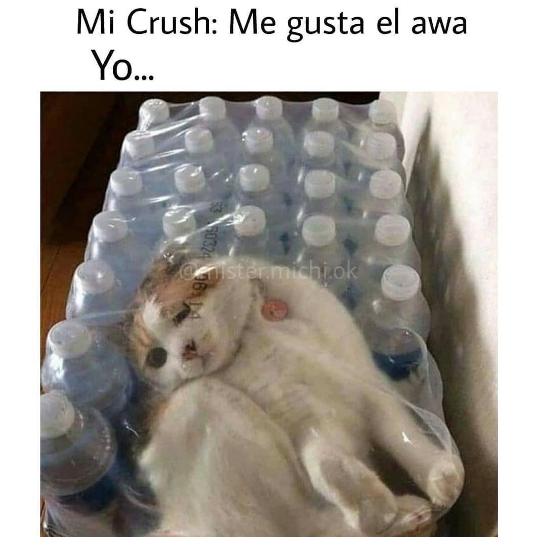 Mi Crush: Me gusta el awa.  Yo...