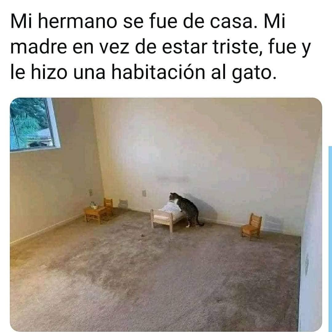 Mi hermano se fue de casa. Mi madre en vez de estar triste, fue y le hizo una habitación al gato.