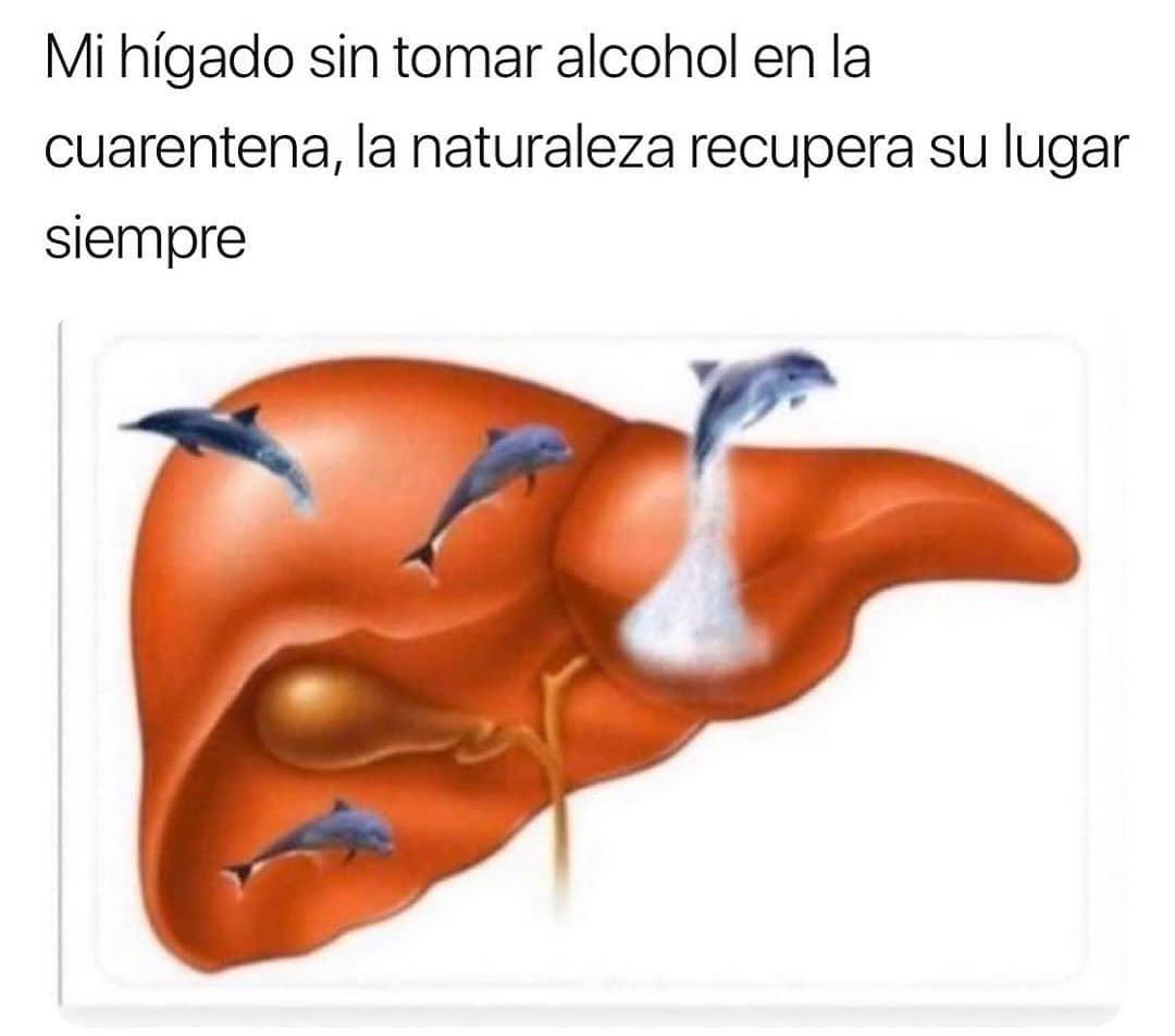 Mi hígado sin tomar alcohol en la cuarentena, la naturaleza recupera su lugar siempre.