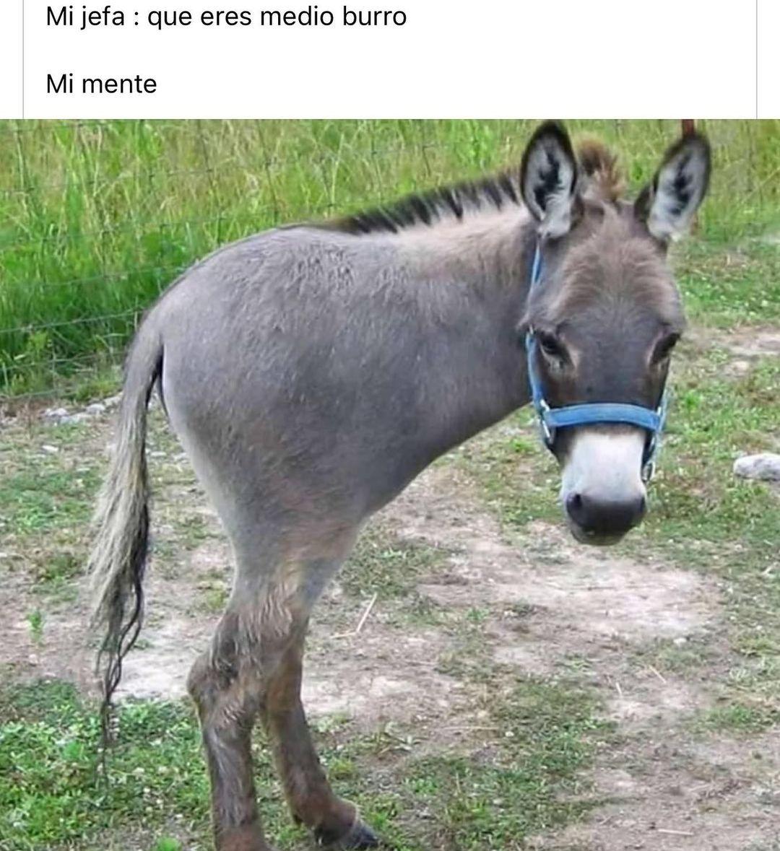 Mi jefa : Que eres medio burro.  Mi mente: