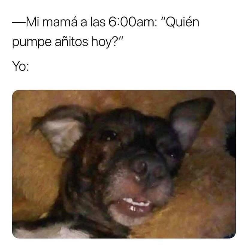 """Mi mamá a las 6:00am: """"Quién pumpe añitos hoy?""""  Yo:"""