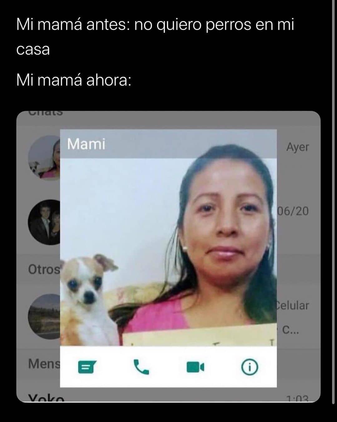 Mi mamá antes: no quiero perros en mi casa.  Mi mamá ahora: