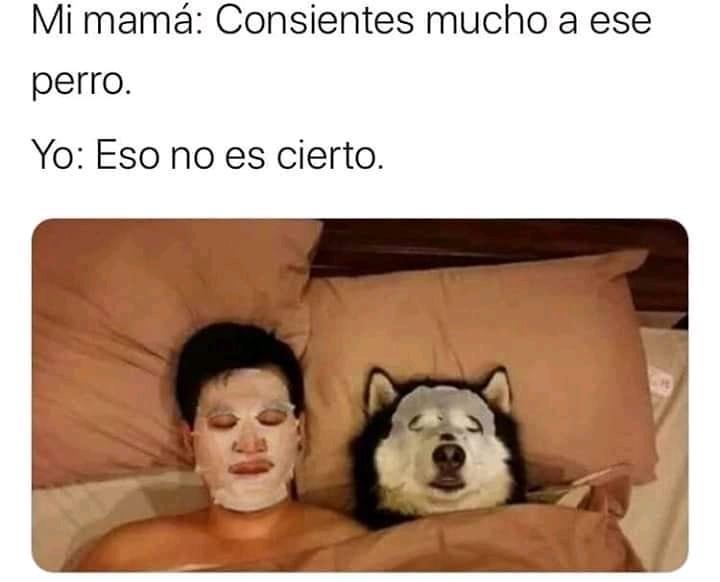 Mi mama: Consientes mucho a ese perro.  Yo: Eso no es cierto.