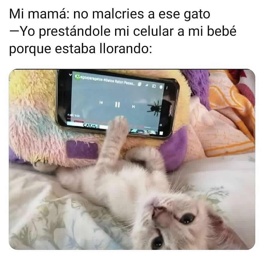 Mi mamá: No malcries a ese gato.  Yo prestándole mi celular a mi bebé porque estaba llorando: