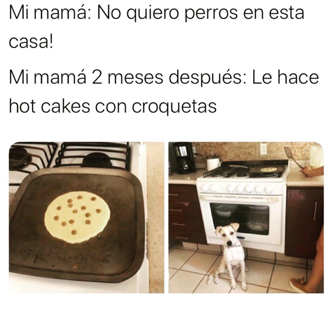 Mi mamá: No quiero perros en esta casa!  Mi mamá 2 meses después: Le hace hot cakes con croquetas.