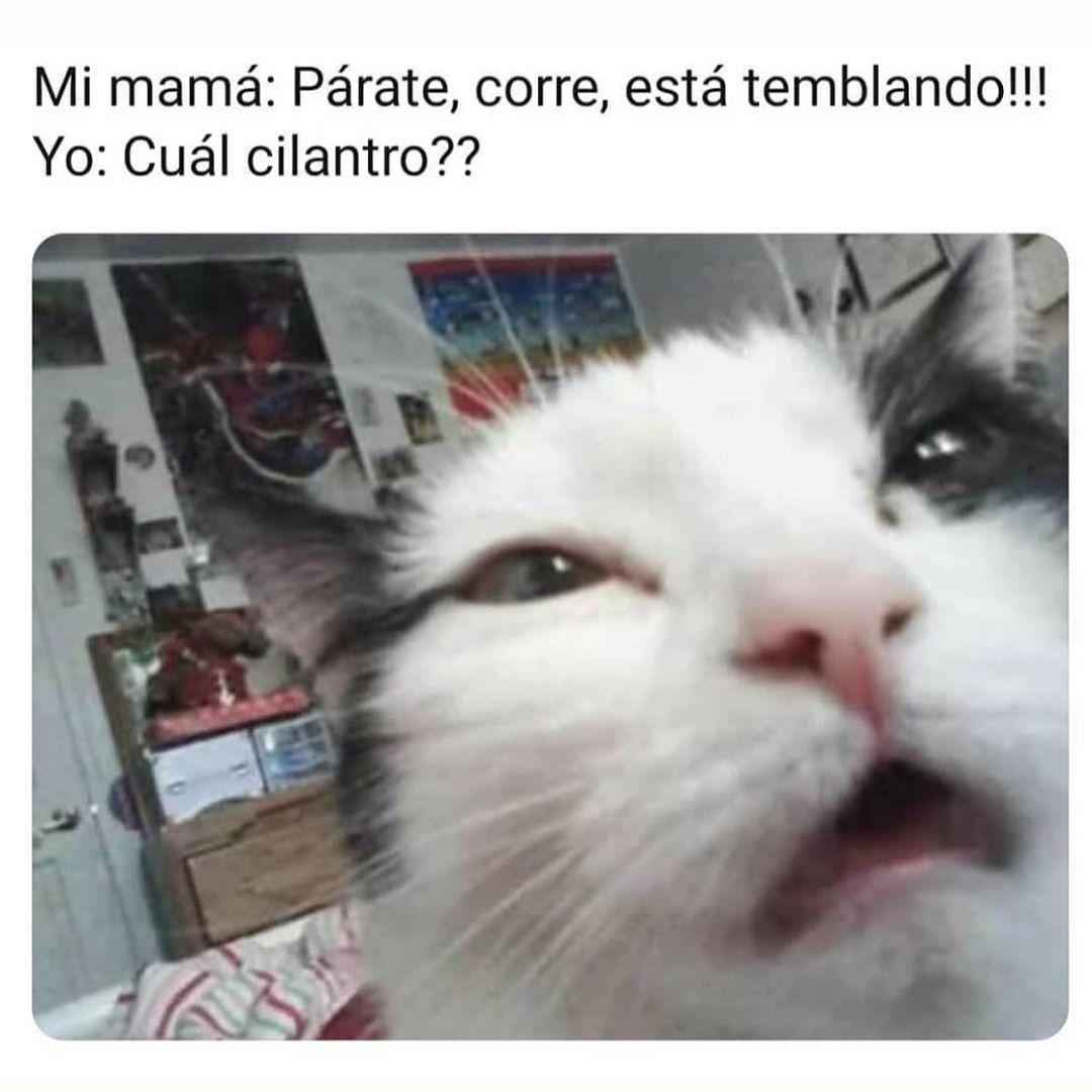 Mi mamá: Párate, corre, está temblando!!!  Yo: Cuál cilantro??