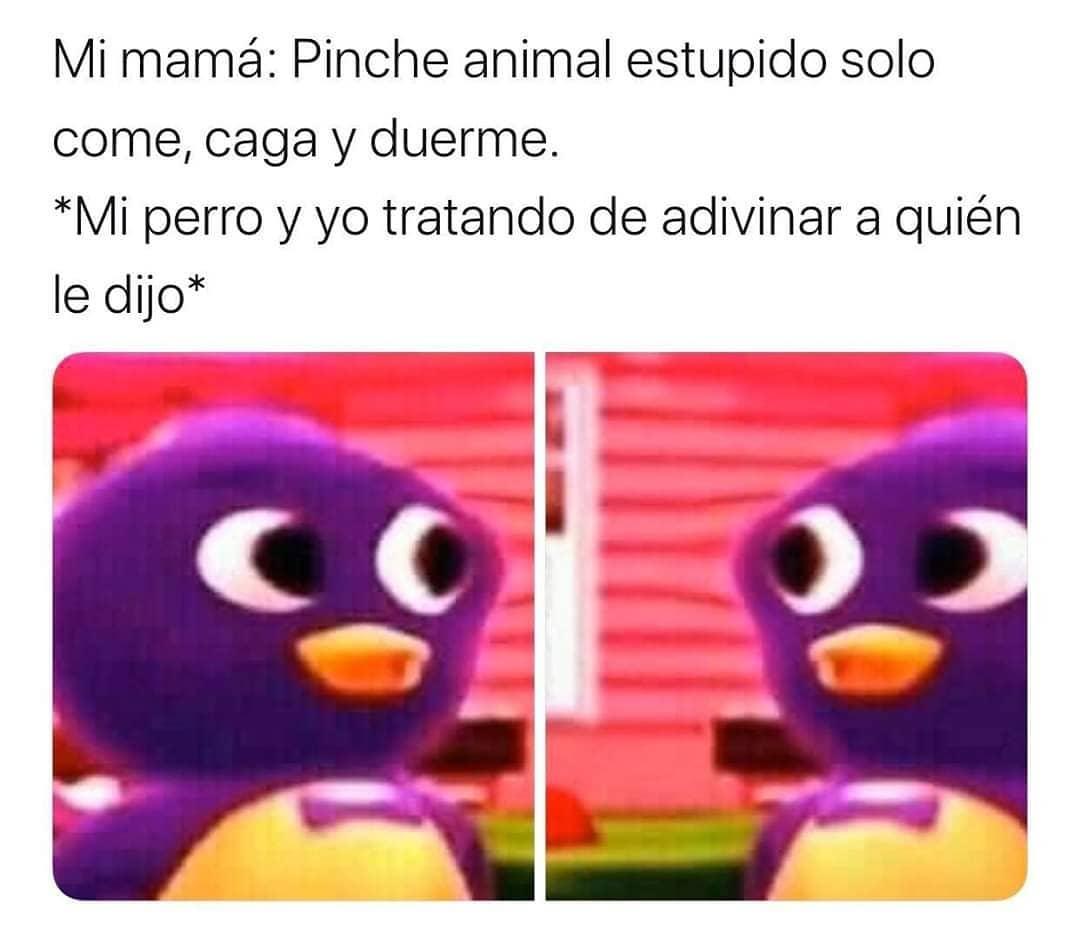 Mi mamá: Pinche animal estupido solo come, caga y duerme.  *Mi perro y yo tratando de adivinar a quién le dijo*.