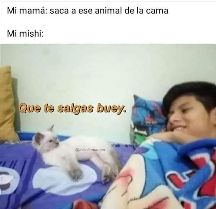 Mi mamá: saca a ese animal de la cama.  Mi mishi: Que te salgas buey.