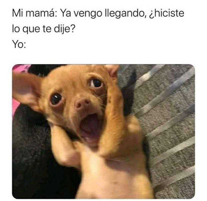 Mi mamá: Ya vengo llegando, ¿hiciste lo que te dije?  Yo: