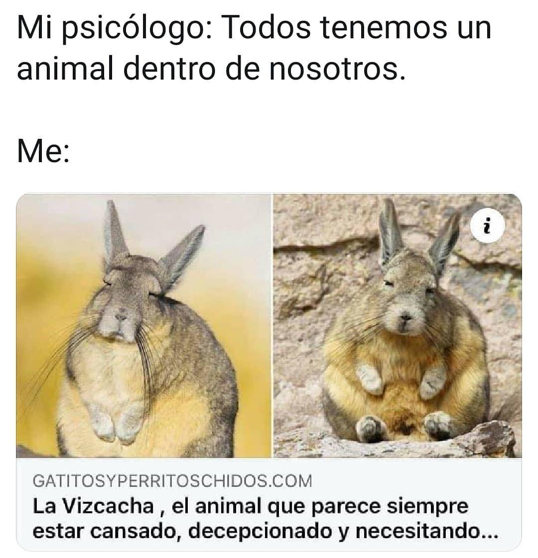 Mi psicólogo: Todos tenemos un animal dentro de nosotros.  Me: La Vizcacha , el animal que parece siempre estar cansado, decepcionado y necesitando.