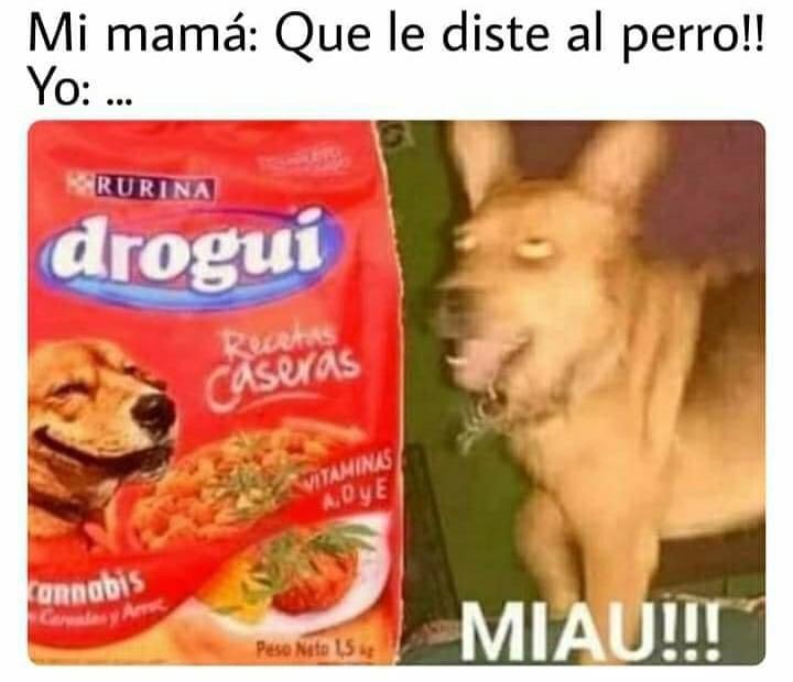 Miau!!!  Mi mamá: Que le diste al perro!!  Yo: Drogui.