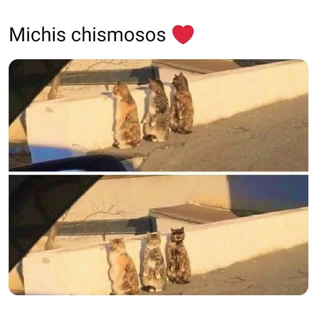 Michis chismosos.