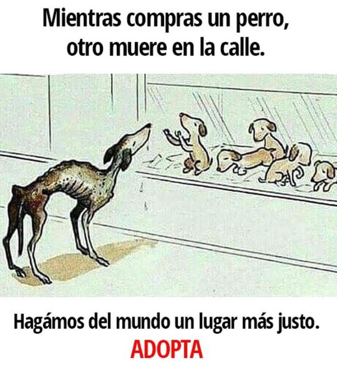 Mientras compras un perro, otro muere en la calle. Hagamos del mundo un lugar más justo. Adopta.
