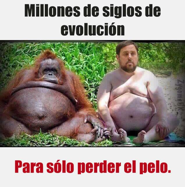 Millones de siglo de evolución.  Para sólo perder pelo.