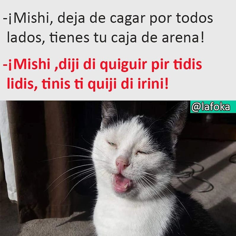 ¡Mishi, deja de cagar por todos lados, tienes tu caja de arena!  ¡Mishi, diji di quiguir pir tidis lidis, tinis ti quiji di irini!