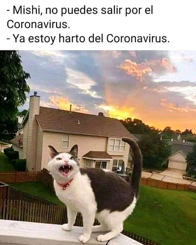 Mishi, no puedes salir por el Coronavirus.  Ya estoy harto del Coronavirus.